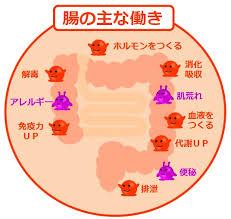 アトピーを完治させるための簡単な6つの腸内環境改善法!