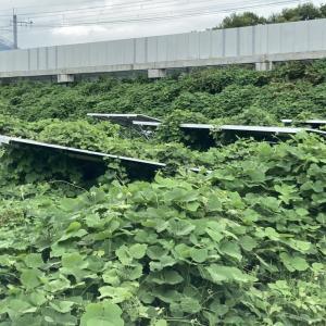 FIT太陽光発電所の管理_02【発電所の雑草の影響】