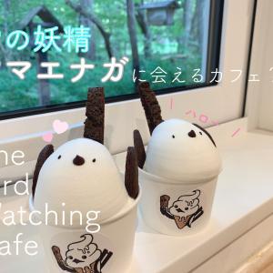 【千歳】シマエナガに会えるかもしれないカフェ The Bird Watching Cafe