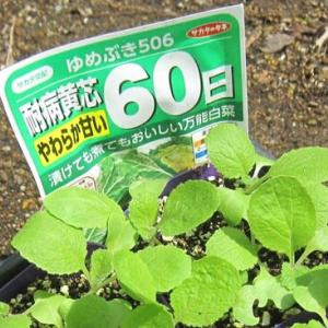 秋冬野菜の準備その他を紹介します。
