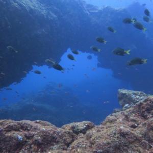 八丈島ダイビングは何が見れる?海以外の自然も楽しめる観光地!