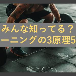 スポーツマンなら必ず知っておきたい!トレーニングの3原理と5原則