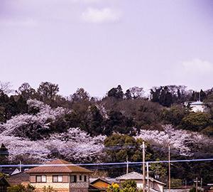 熊本桜と花々2019(1)