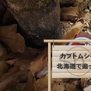 【夏限定のデートプラン】北海道でカブトムシは捕れる!道央でカブトムシが捕れる場所を調べて探し歩いた記録