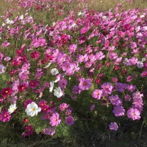 庭の花です その後