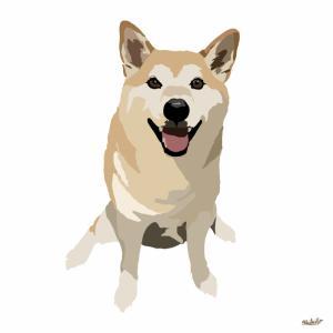 柴犬064