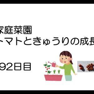 家庭菜園:トマトときゅうりの成長(92日目)