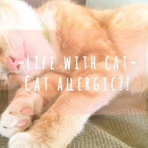 猫アレルギー・猫嫌いがねこを飼うと…治った?!〜わが家に猫がやって来た〜