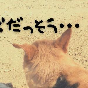 愛犬脱走事件!!!!