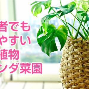 竹脇まりなちゃんも愛用の観葉植物モンステラと育てやすい植物