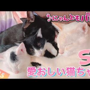 【ねこ動画まとめ】愛おしい猫ちゃん特集〜にゃんともパレード〜