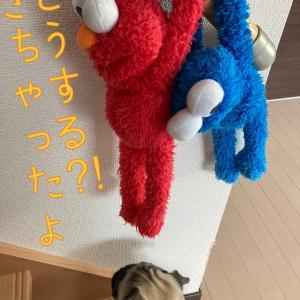 パグ 『セサミ・ストーリー』 今日の主役はエルモ&クッキーモンスター