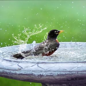 私のアトピー最重要対策 シャワーの温度の調整が命
