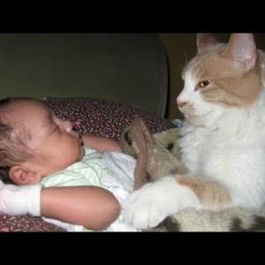 【猫が守る】猫が人間の赤ちゃんを守ろうと必死な映像