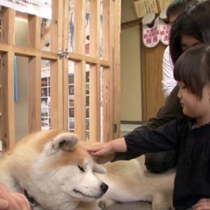 秋田犬 〜忠誠心に厚い日本の犬〜