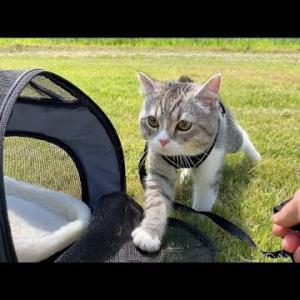 生まれて初めて外の世界に出てお散歩デビューした猫の反応が…!