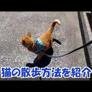 猫のいろんな散歩方法を紹介