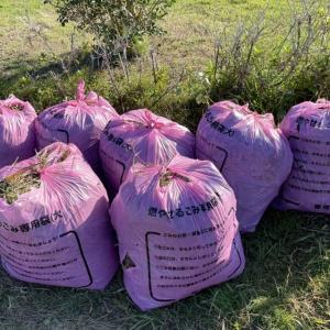 御宿菜園 | 先週の草たちを袋詰め~種まきに向けて