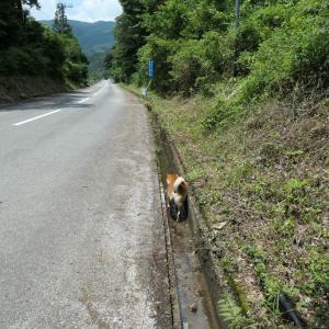 水路を散歩する犬