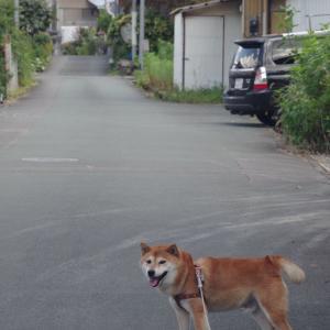 昔のレンズで撮る、田舎道と犬