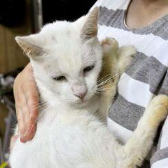 カラスに襲われていた迷い猫、約2年ぶりに飼い主の元へ帰る