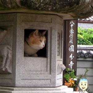 香川県の由緒ある寺にすむ1匹の猫が人気 灯籠の中でくつろぐ