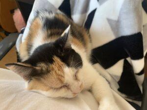 俺の飼ってる猫がメンヘラすぎて辛い