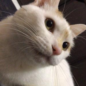 【画像】ワイの家の猫