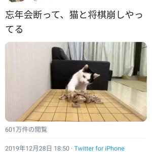 【動画】忘年会を断り猫と遊んだ結果wwwww 「動物」の可能性を無限大に広げました。