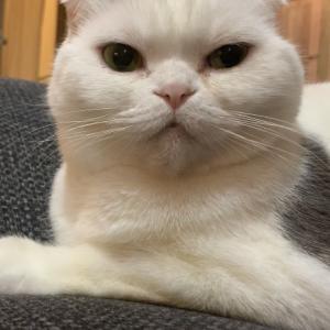 うちの猫が俺をじっと見つめてくる時って何を考えてるんだ