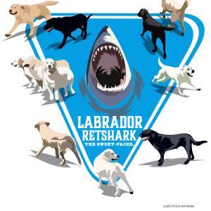 ラブラドール・レトシャーク!ラブラドールがサメの標識に群がる図!