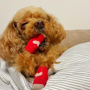 犬の歯磨きの必要性とは?歯磨きが必要な理由とその頻度を分かりやすく解説