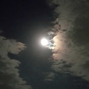 中秋の名月🌾