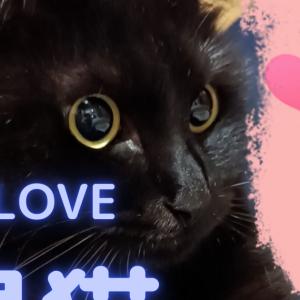 我が家の黒猫紹介( ミΦﻌΦ)ฅ