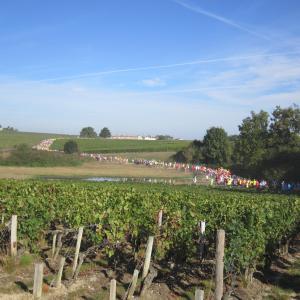 フランス・ボルドー#2014-08 メドックマラソン