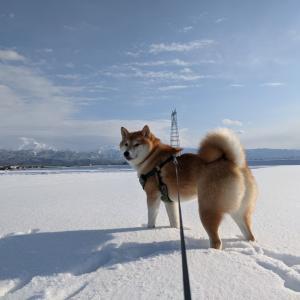 今更ですが。雪遊び!
