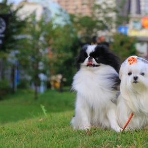 秋のはじまり・・・イングリッシュガーデン横浜