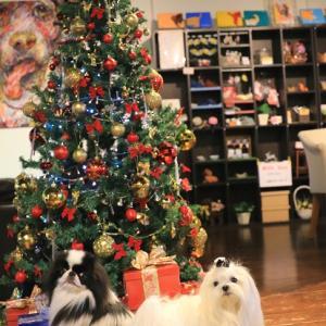 愛犬撮影会★お正月とクリスマス