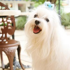 犬の平均寿命と女王陛下のお誕生日