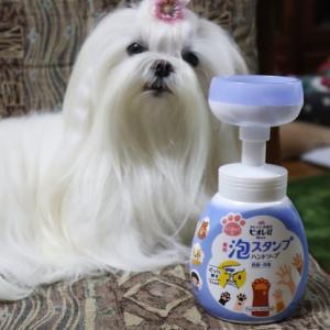 肉球泡ソープ♥可愛すぎる~~!