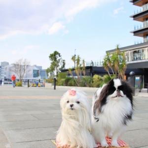 さよなら・・・『犬にやさしい街』