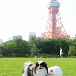 東京タワーと芝公園♥ちょこっと散歩~