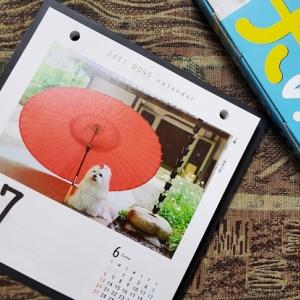 来年の日めくり♥犬めくりカレンダー