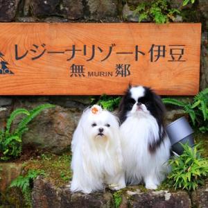 GoToキャンペーンで再び伊豆へ♥レジーナリゾート