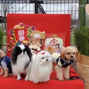今年初♥新横浜公園ドッグラン
