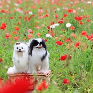 花の国に行ってきました♥くりはま