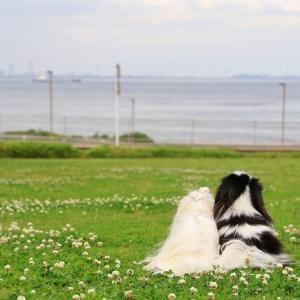 芝生と海と空のレストラン♥アクアマーレ