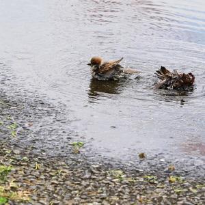 地元フラペチーノは青い♥梅雨の散歩