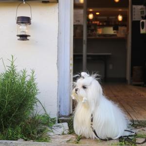 再開♥ドッグランのある美味しいコーヒー屋さん
