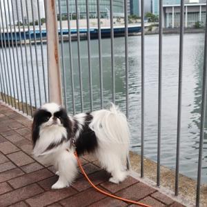 横浜ベイクォーターでお散歩